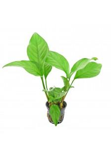 Mix plantes naturelles bouquet