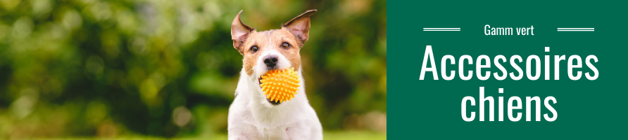 Accessoires chiens